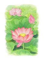 四季の草花 蓮