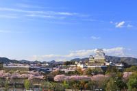 兵庫県 桜咲く姫路城全景