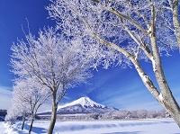 山梨県 樹氷と富士山