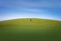 中国 草原の1本の木