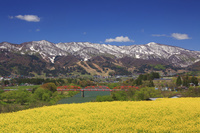 長野県 飯山市 菜の花畑と千曲川と大関橋と鍋倉山などの山並み