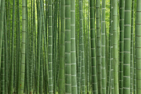 栃木県 若竹の杜の竹林