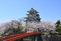 岐阜県 桜と墨俣一夜城