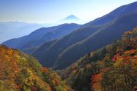 山梨県 櫛形山林道から望む紅葉の山並みと富士山