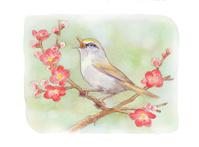 春 立春 黄鶯睨院