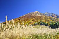 鳥取県 桝水高原のススキと紅葉の大山