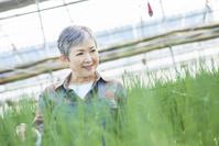 ハウスで野菜の品質に目を配るシニア日本人女性