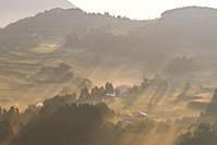 鹿児島県 朝もやに包まれる茶畑と集落