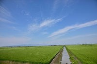 佐賀市 佐賀平野 小麦畑