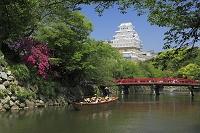 兵庫県 姫路城と新緑
