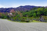 京都府 天龍寺 庭園 春