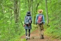 緑の森を歩くハイカー