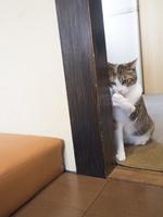 奈良の家猫