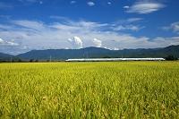 山形県 田園と新幹線