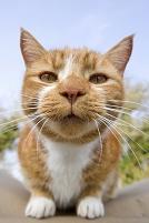 顔を近づける猫