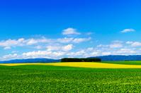 北海道 なだらかな夏の田園の丘