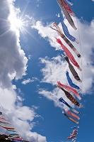 愛媛県 大川鯉のぼり祭り