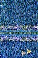 静寂の湖Ⅱ