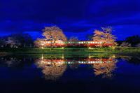 千葉県 飯給駅にとまる小湊鉄道 桜のライトアップ