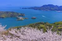 愛媛県 カレイ山展望公園より桜咲く能島(能島城跡)と鵜島