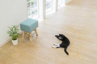 床に寝そべり振り向く猫