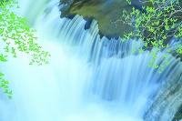 栃木県 奥日光 竜頭滝とツツジの若葉