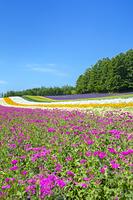 北海道 花々咲くファーム富田