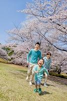 桜の咲く公園を走る三人家族