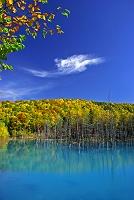 北海道 ブルー沼