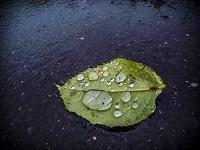 路上の枯葉に雨粒