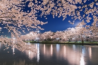 青森県 西濠と桜ライトアップ 弘前城