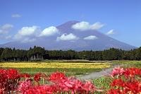 静岡県 御殿場市 彼岸花と富士山