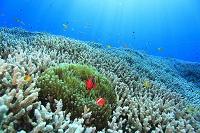 海中 サンゴ礁 石垣島