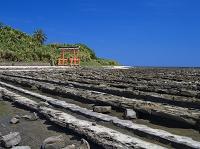 宮崎県 鬼の洗濯板と青島の隆起海床と奇形波蝕痕