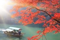 京都府 嵐山 大堰川沿いの紅葉と屋形船