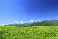 静岡県 朝霧高原 初夏の草原