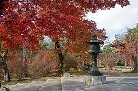 京都市 秋の仁和寺境内 鐘楼を望む
