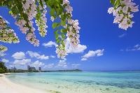 グアム島 タモンビーチのブーゲンビリアの花