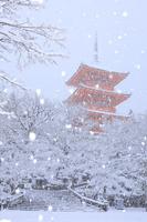 京都府 清水寺 雪降る朝の三重塔