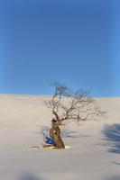 北海道 雪原の丘の盆栽の木