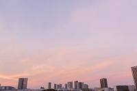 東京都 有明から望む新豊洲、東雲周辺のビル群 夕景