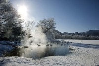 北海道 露天風呂の白鳥