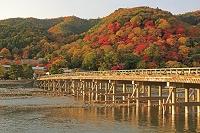 京都府 朝焼けの渡月橋と桂川と紅葉の嵐山