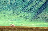 タンザニア ンゴロンゴロ・クレーターと象