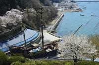 宮城県 渡波港を望むサン・ファン・バウティスタ号と桜