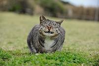 神奈川県 野良猫