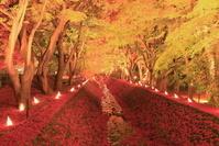山梨県 河口湖の紅葉まつり