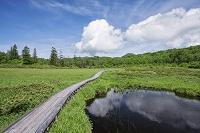 北海道 神仙沼の高層湿原