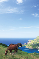 島根県 国賀海岸 赤尾展望所からの眺望と馬