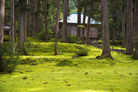 福井県 白山神社 拝殿 苔の庭園